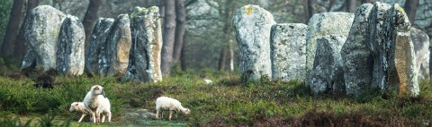 Photo The Carnac standing stones – Morbihan - Brittany par Philip Plisson