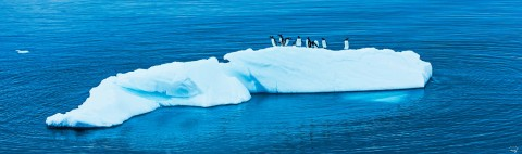 Photo Manchots et iceberg, Antarctique par Philip Plisson