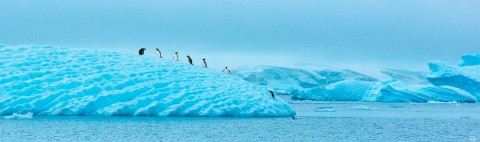 Photo Penguins and ice floe par Philip Plisson
