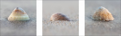 Photo Coquillages sur la plage par Philip Plisson