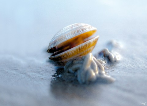 Photo Petit coquillage à marée basse par Philip Plisson