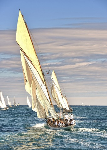 Photo Partridge at the Voiles de Saint-Tropez regattas par Georges-Félix Cohen