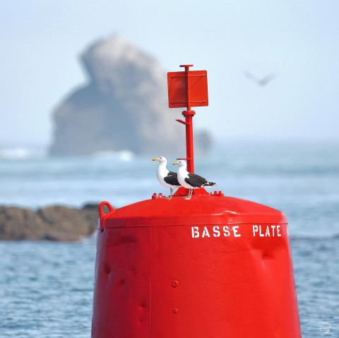 Photo Turret port channel par Philip Plisson